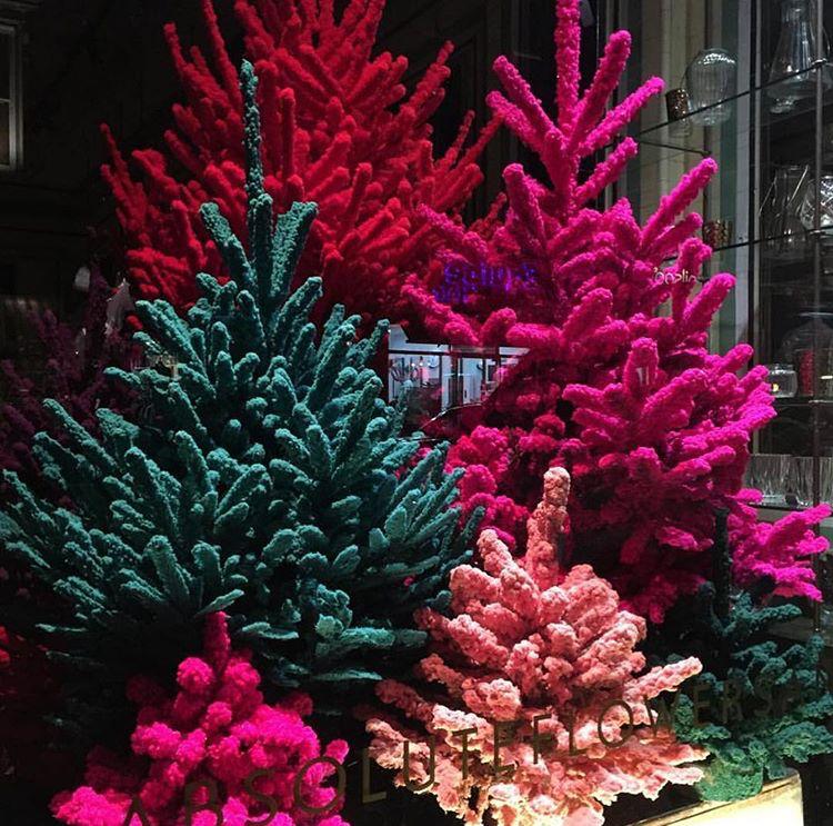 Цветна Коледа...