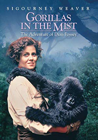 """""""Горили в мъглата"""" (1988) Драмата представя борбата на Диан Фоси (Сигорни Уийвър) срещу бракониерството на горили в Руанда. Блестящата игра на доста младата тогава Уийвър и прекрасните сцени от Африка ще ви накарат да се влюбите в големите маймуни, а някои от вас биха се просълзили от драматичните моменти във филма."""