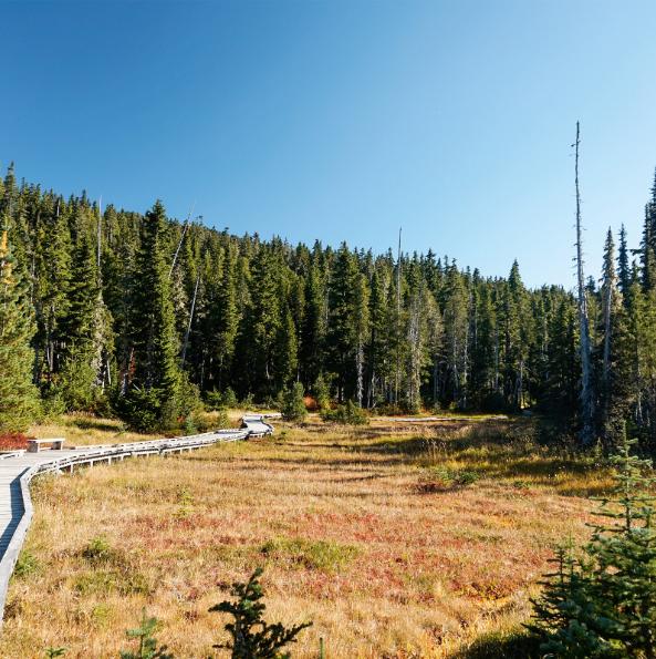 """Кортни (Британска Колумбия), Канада Кортни е идеалната отправна точка за приключения: планини, поляни и малки бохемски селца - дефиницията на """"комуникативно място""""."""